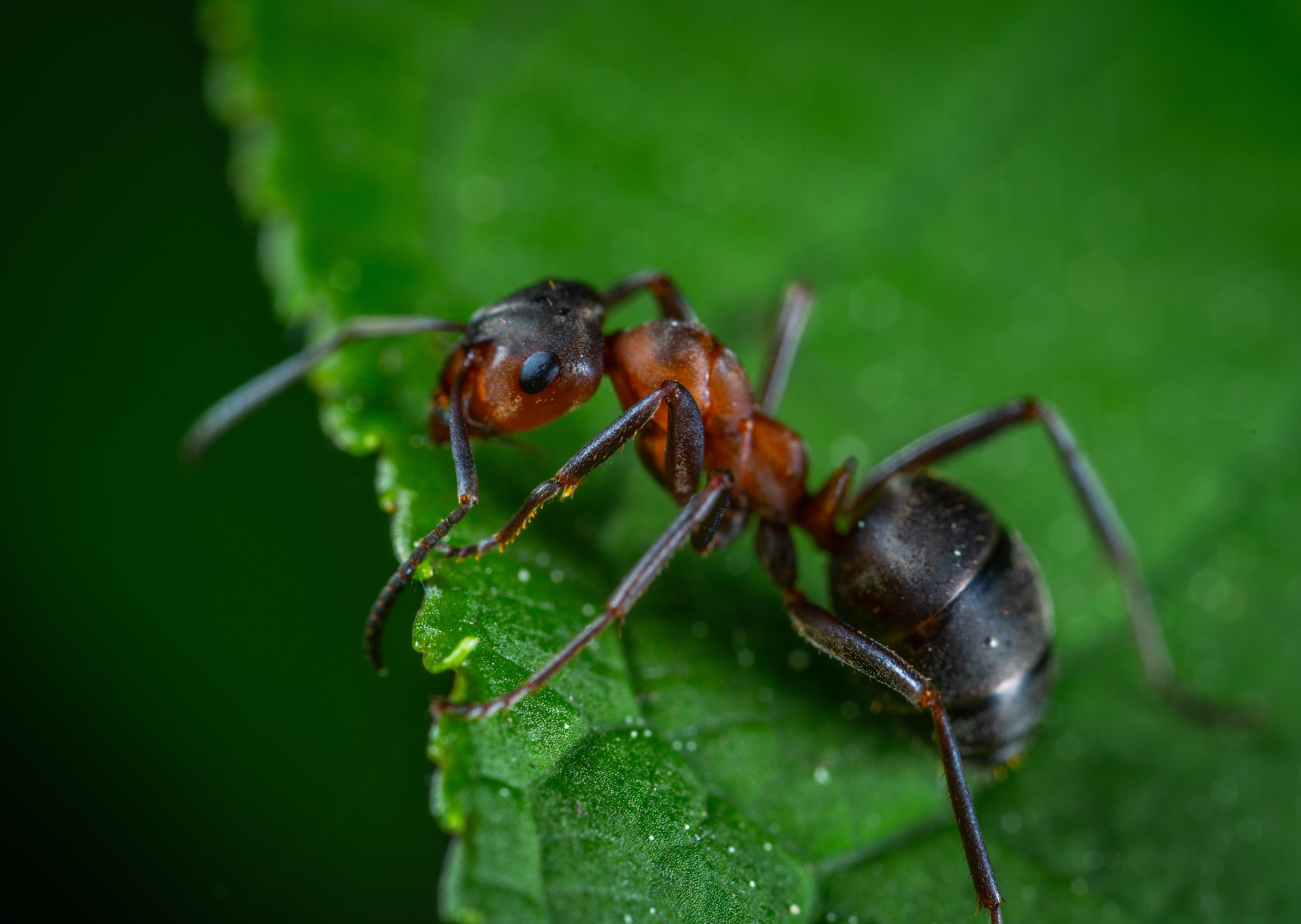Sipelga 3 on Eesti esimene ühisrahastatud kinnisvaraprojekt